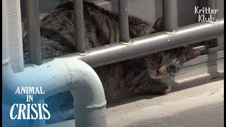 Cat Stranded On Roof Cries, Seeing Her Sister Begging People To Rescue Her | Animal in Crisis EP181
