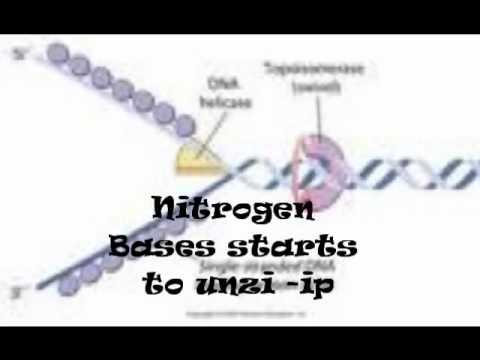 DNA REPLICATION SONG (2)