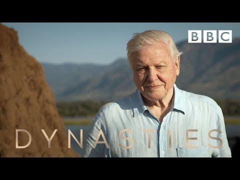 Sir David Attenborough on his new series, Dynasties - BBC