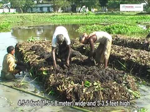 Floating Vegetable Garden Technology