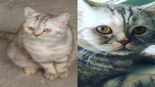 Как развивается кошка ? Буська? | Kanchuk ( ˘ ³˘)❤