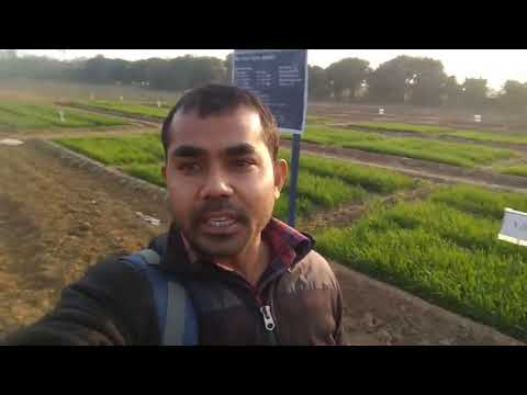 A Glimpse of my research work on Precision Agriculture at WTC,IARI..