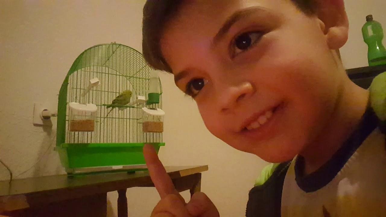 Download Moj prvi papagaj koi je ludbi pokvaren