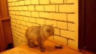 Doorbell for the cat / Дверной звонок для кота(This doorbell, my cat has been using for 6 years ---- Этим звонком мой кот пользуется уже 6 лет., 2013-01-04T23:31:19.000Z)