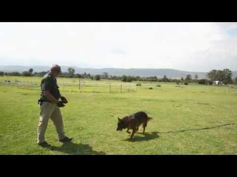 EDD Explosive Detection Dog Flint Play Time   Zanmarheim K9 and Security