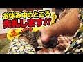 スヤスヤ寝ている猫にイタズラしてみた!〜I played with the sleeping cat!〜