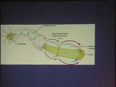 Applied neurophysiological studies - Prof. Wisam Gaber
