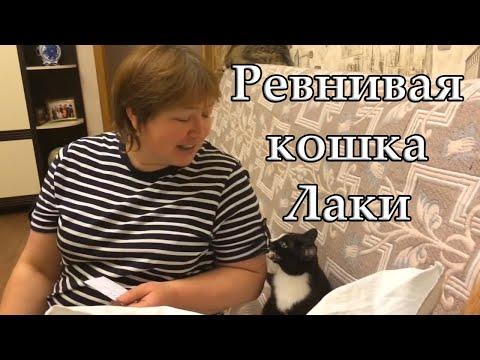Ревнивая кошка /