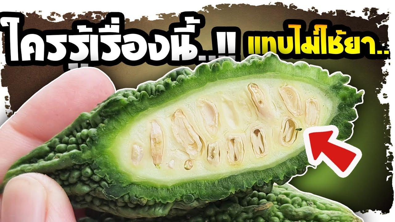 อาการนี้ รีบกิน!! พบยาดีจากมะระขี้นก ที่คนส่วนใหญ่ไม่รู้ แถมใช้มานานกว่า 1000 ปี| Nava DIY