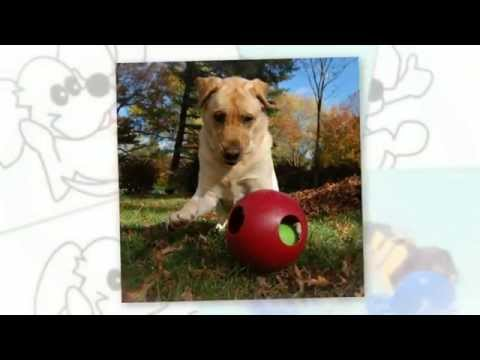 teaser-ball™-by-jolly-pets®