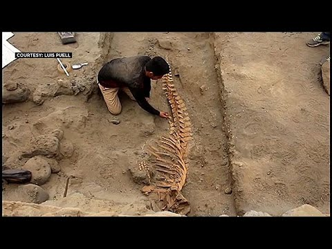 فيديو: اكتشاف بقايا حوتيْ عنبر في بيرو يسهم في معرفة أسرار حضارة مندثرة…  - نشر قبل 2 ساعة