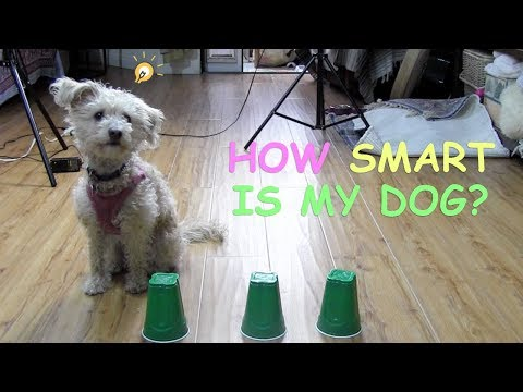 HOW SMART IS MY DOG? (INTELLIGENCE TEST)