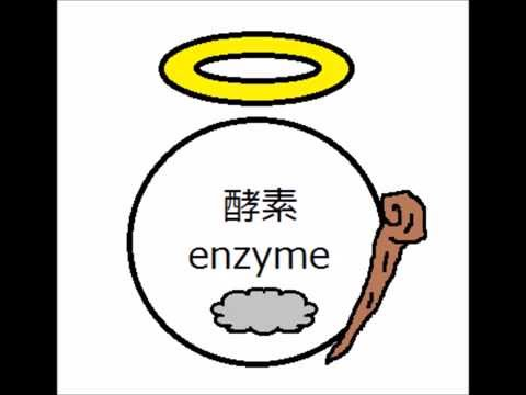 石川県立大学生化学ビデオ 酵素