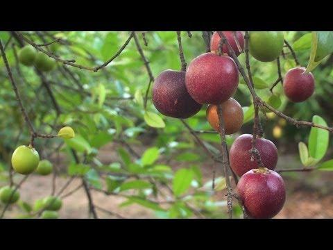 Medicinal plants of India : Kannada (ಔಷಧೀಯ ಸಸ್ಯಗಳು)