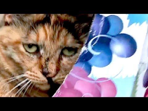 【狭くない?】お出迎えニャン太が「いない!」と思ったら・・【猫と日本の庭】