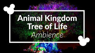 Tree of Life Nighttime Ambience | Disney World Area Music Loop | Disney Animal Kingdom Scenescape