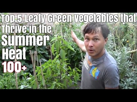 Top 5 Leafy Green Vegetables that Thrive in the Summer Heat 100+