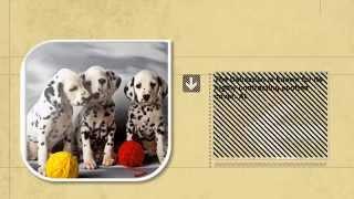Dog Facts: Dalmatian Puppies Are Born Pure White