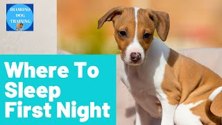 Where Should Your Puppy Sleep The First Night/ Tips From Italian Greyhound  Puppy Breeder