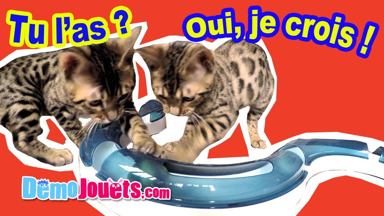 jouet chat circuit