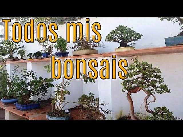 Un paseo por mi zona de bonsai - julio 2020