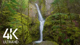 Relaxing Sounds of Oregon Waterfalls - 8HRS of Birds Chirping and Falling Water Sounds (4K UHD)