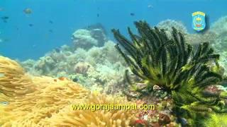ラジャアンパットの海 Raja Ampat: Jewel of the Coral Triangle