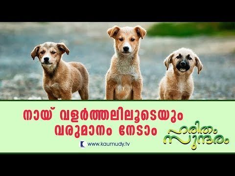 Huge profit from Dog farming  | Haritham Sundaram EP 135 | Kaumudy TV