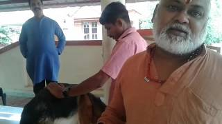 rescue of dogs in kerala