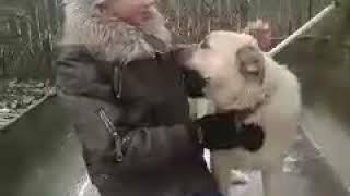 Знакомство с собаками