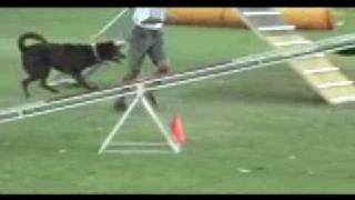 Dog Agility Training 2009