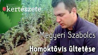 видео Hippophae rhamnoides