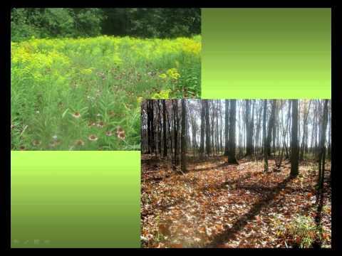 Landowner Leaders - Q&A Webinar: Caring for Carolinian Habitat on Your Land