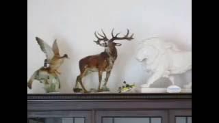 Ankauf Porzellanfiguren wie Meissener Allach KPM Rosenthal