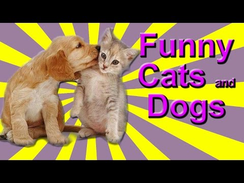 Funny Cat and Dog Videos – Kittens Annoying Dogs, Dogs Bothering Cats, Cats Chasing Dogs