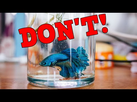 Are Betta Fish Happy In A Vase Or Cup? What's The Best Tank For A Betta Fish? T.O.O.L.
