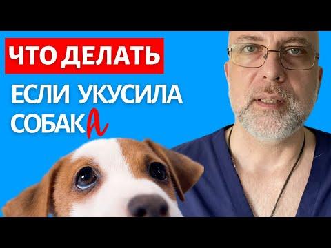Чем обработать рану после укуса собаки в домашних условиях