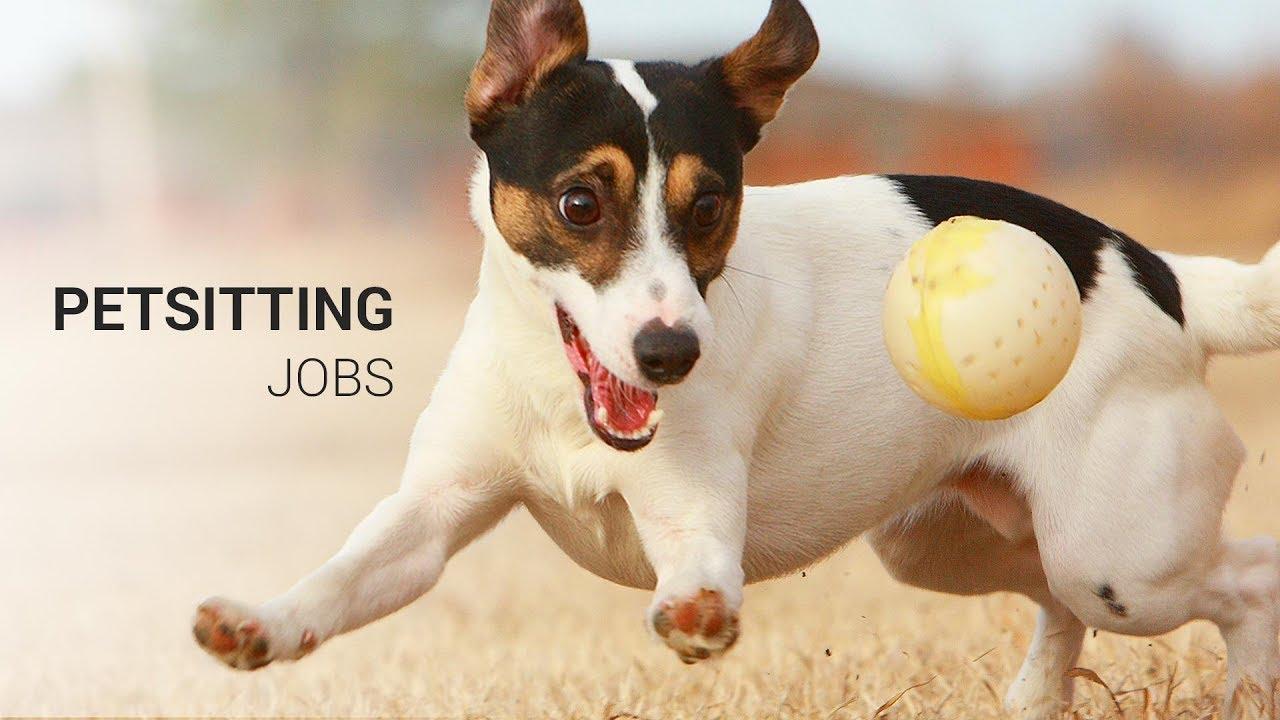 Wag! dog walking jobs in Denver, CO - AppJobs