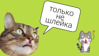 Шлейка для кота|Василий первый раз надел шлейку