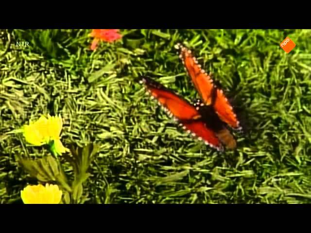 Sesamstraat - Grover en de vlinder
