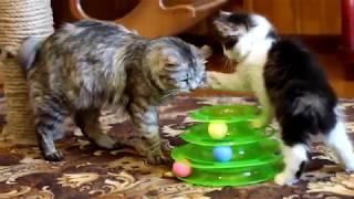 Нова іграшка у кішок :D