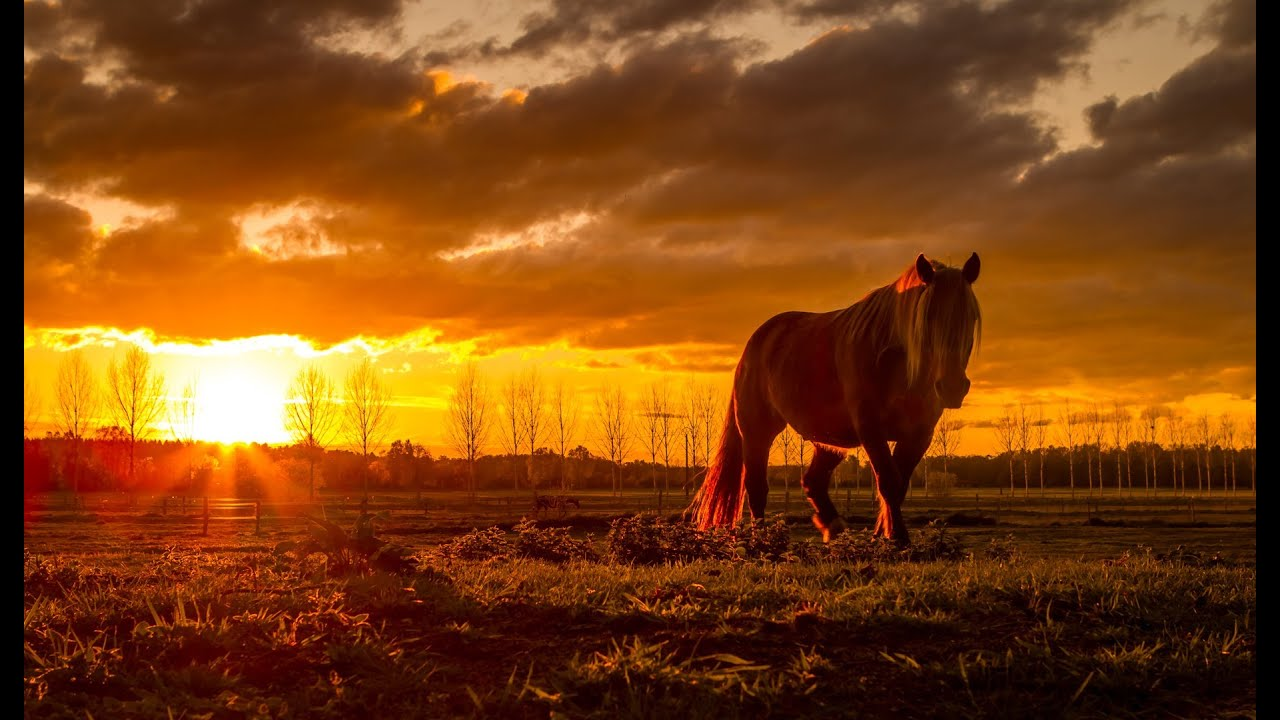 Fall Wallpaper Horses How To Shoot And Retouch A Photo Taken Straight Into The