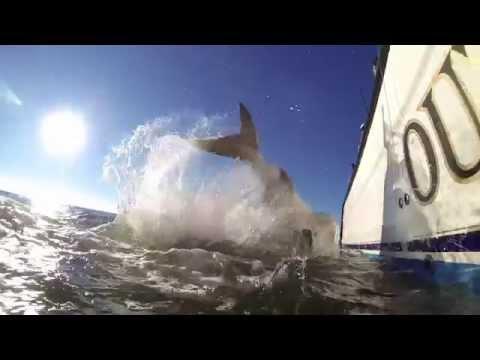 OUTCAST SPORT FISHING - Hilton Head Fishing Charters - Hilton Head Charter Fishing
