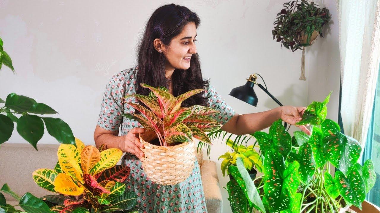 Growing Colourful Indoor Plants | Caladium, Wandering jew, Aglaonema, Fittonia
