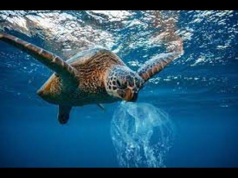 Broery Pesulima - Sepanjang Jalan Kenangan