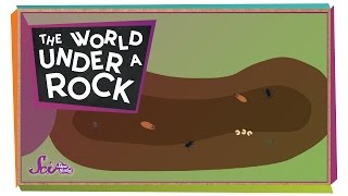 The World Under a Rock!