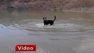 Balıkçı köpek sahibine günlük iki kilo balık yakalıyor