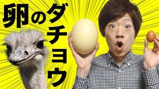 ダチョウの卵で超巨大目玉焼き作ってみた!