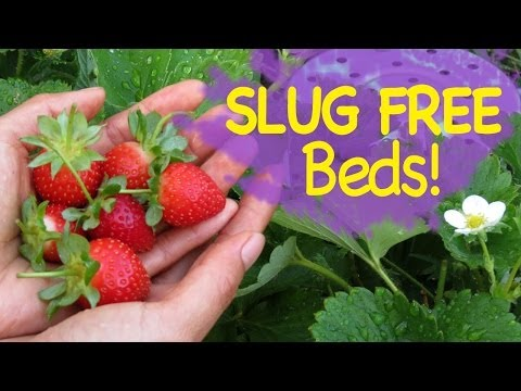 HOW TO Control Slugs and Snails In Your Garden