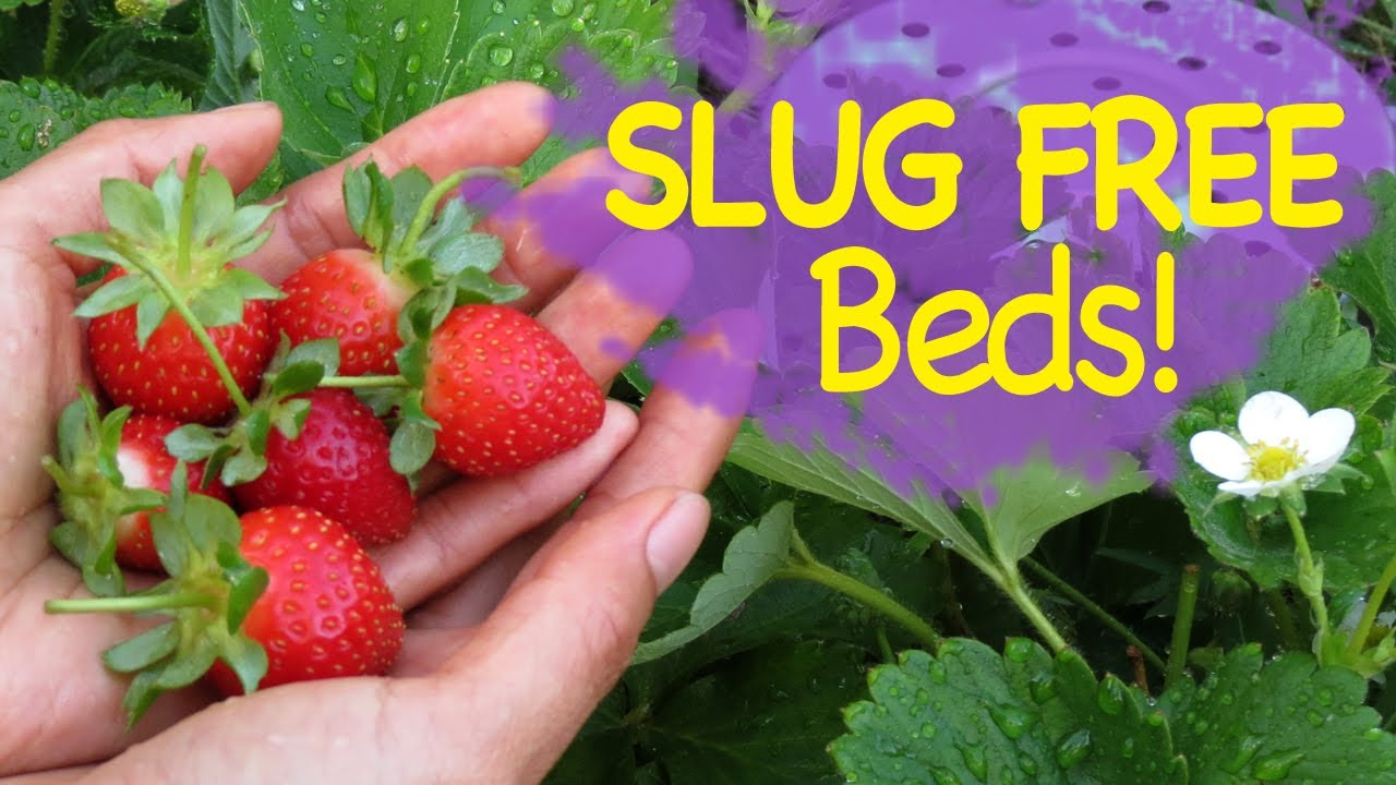How to deal with slugs